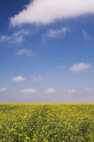 Green Grass and Yellow Plants and Blue Sky Stock Photo