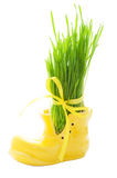Green grass in a yellow shoe Stock Photo