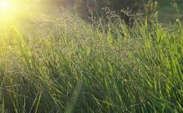 Green grass and yellow sunlight. Fresh green grass and yellow sunlight Royalty Free Stock Images