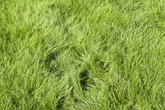 Green grassed area Royalty Free Stock Image