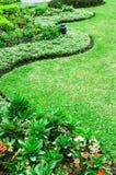 Green grasses. Curve of grasses in green garden Stock Photo