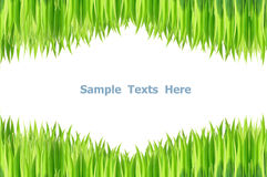 Green grasses Stock Photos
