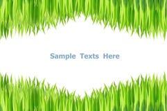 Green grasses. On white background stock photos