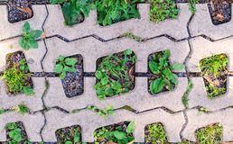 Green grasses in  holes of paving blocks. background, pattern Stock Photography