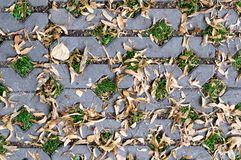 Green grasses in  holes of paving blocks with seeds at autumn. background, pattern, texture. Royalty Free Stock Image