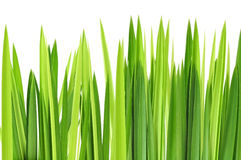 Green grasses layer. On white background Stock Photo
