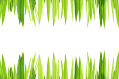 Green grasses layer. On white background Royalty Free Stock Photo