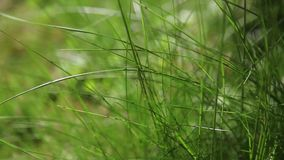 Green grasses stock video footage