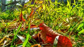 Green grasses. In morning sunlight and dry lesf royalty free stock photo