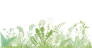 Free Green Grasses, Plants And Herbs - Illustration Stock Image - 179425871