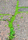 Green grasses on porous rock floor Stock Photo