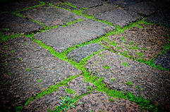 Green grasses on porous rock floor Royalty Free Stock Images