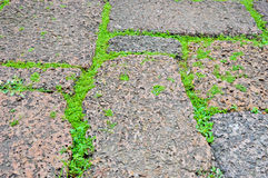Green grasses on porous rock floor. Line of grasses on stone floor Royalty Free Stock Photography