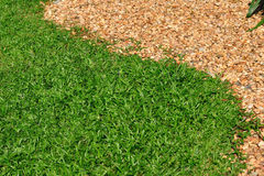 Green grasses and small stone separated Royalty Free Stock Photography