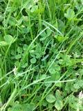 Green grasses Stock Photos