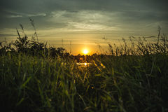 Green grasses with sunset and blue sky Royalty Free Stock Photos
