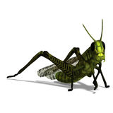 Green grasshopper Stock Photography