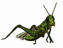 Green grasshopper stock illustration