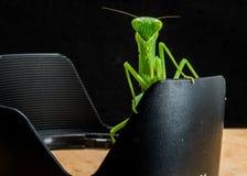 Green Grasshopper on Black Metal royalty free stock photo