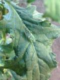 Green grasshopper Royalty Free Stock Photo