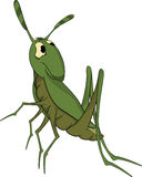 Green grasshopper. Cartoon stock illustration