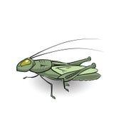 Green grasshopper Stock Images