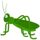 A green grasshopper Stock Photos