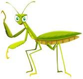 Green grasshopper on white background Royalty Free Stock Photo