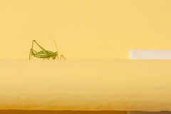 Green grasshopper on a yellow tube Stock Images