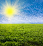 Green grassland Stock Photography