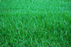 Green grassland. A grassland background at decoration Stock Photo