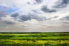 Green grassland Stock Image