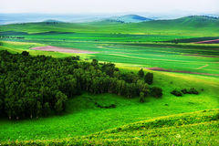 Green grassland Stock Photos