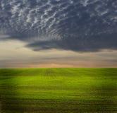 Green grassland Stock Photography
