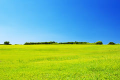 Green grassland against clear blue sky Stock Photos