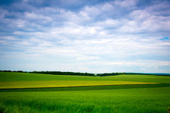 Green grassland and blue sky in summer Royalty Free Stock Image