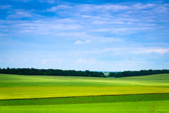 Green grassland and blue sky in summer Royalty Free Stock Photos