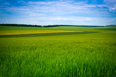 Green grassland and blue sky in summer Stock Photography
