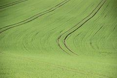 Green, Grassland, Field, Ecosystem royalty free stock photos