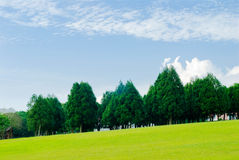 Green grassland, pine trees under blue sky Stock Image