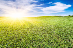 Green grassland and sky Royalty Free Stock Image