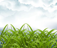 Green grassland and storm cloud Royalty Free Stock Photo
