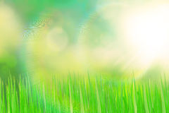 Green grassland and sunlight Stock Photos
