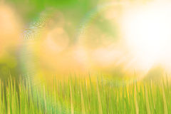 Green grassland and sunlight Royalty Free Stock Images