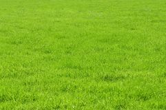 Green grassland texture Stock Photos