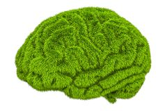 Green grassy brain, 3D rendering. Isolated on white background Stock Images