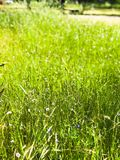 Green Grassy Field in Oak Grove Cemetery stock image