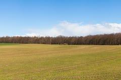 Green Grassy Field under Bright Blue Sky Royalty Free Stock Photo