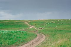Green, grassy hill. The path, the road on the hill. Summer season. stock images