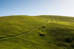 A green, grassy hill terraced by cattle grazing on a ranch with a road along the hillside stock photo